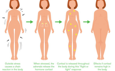 How Does Stress Effect Our Bodies